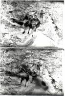 2 Plaques De Verre Négatifs Originaux Jeux Sur Tronc D'arbre & Ballade Au Bois De Bapeaume-lès-Rouen 76380 En 1931 - Glass Slides