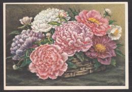 93433/ FLEURS, Illustration, Pivoines - Flowers
