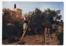 Provence -- Cueillette Des Olives  (animée) - Landbouw