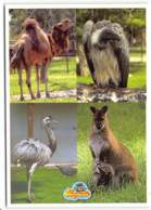 Bagatelle. Parc D'attractions.  Zoo   1 - France