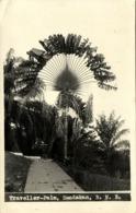British North Borneo, SABAH SANDAKAN, Traveller-Palm (1920s) RPPC Postcard - Malaysia