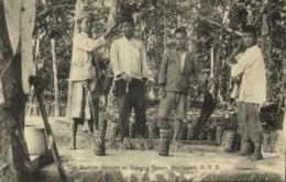 British North Borneo, SABAH SANDAKAN, Sekong Estate Rubber Stumps (1910s) - Malaysia