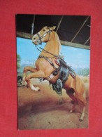Roy Rogers Famous Horse  Trigger   Ref 3616 - Pferde
