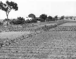 Photo Haute Volta 1980. Efforts Agricoles De La Mission Adventiste De Bazera. Photo Du Père Gust Beeckmans - Africa