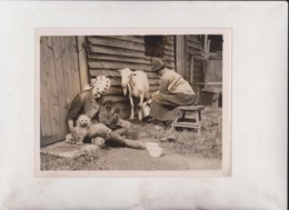 JADE DOGS REST CURE LONDON SEASON GOG BARNACRE COWLEY NEAR UXBRIDGE PUPPIES   20*15CM Fonds Victor FORBIN 1864-1947 - Fotos
