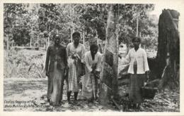 British North Borneo, SABAH SANDAKAN, Bode Rubber Estate, Coolies Tapping 1930s - Malaysia