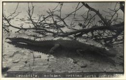 British North Borneo, SABAH SANDAKAN, Large Crocodile (1930s) Real Photo - Malaysia