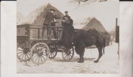 LORD JOHN SANGERS THE CAMEL ELEPHANTS PINT LIVER OIL CHAMEAUX DROMADAIRES 16*12CM Fonds Victor FORBIN 1864-1947 - Fotos