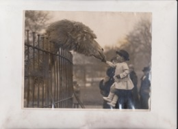 LITTLE PETER PLAYFAIR GIRAFFE ACTOR DROMEDARY CAMEL CHAMEAUX DROMADAIRES 21*16CM Fonds Victor FORBIN 1864-1947 - Fotos