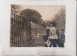LITTLE PETER PLAYFAIR GIRAFFE ACTOR DROMEDARY CAMEL CHAMEAUX DROMADAIRES 21*16CM Fonds Victor FORBIN 1864-1947 - Sin Clasificación
