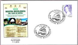 27 EXP.MICOLOGICA - 27 EXP.MYCOLOGICAL. Setas - Mushrooms. Putifigari, Sassari, 2010 - Hongos