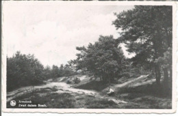 ARENDONK - Zwart Duinen Bosch - Uitg. Wwe J. Carpentier-Vosters, Arendonk - N'a Pas Circulé - Arendonk