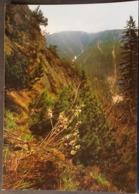 Ak Tschechien - Blumen Aus Dem Riesengebirge - Gemeiner Seidelbast - Blumen