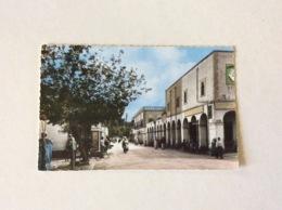 Laghouat. Avenue Marguerite - Laghouat