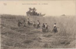 CPA   2TYPES ET SCENE LA MOISSON   TTB +++ - Landbouw