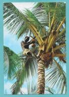 KENYA PALM TREES - Kenia