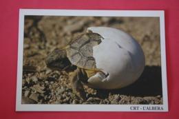 Albera - Nice Turtle  - Old Postcard - Schildpadden