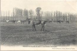 CPA Nesles-la-Vallée Les Grands Herbages Chevaux - Autres Communes