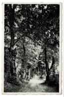 Rochefort - L'Allée Des Tilleuls à Lorette - Circulée - 2 Scans - Rochefort