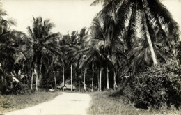 British North Borneo, JESSELTON, Native Houses Between Palm Trees (1933) RPPC - Malaysia
