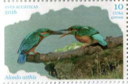 Lote CU2016-6, Cuba, 2016, Sello, Stamp, Aves Acuaticas, 6 V, Water Bird - Cuba
