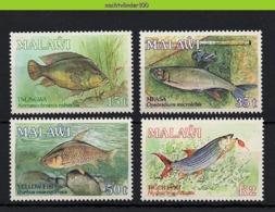 Nff029 FAUNA VISSEN FISH FISCHE POISSONS MARINE LIFE MALAWI 1989 PF/MNH - Fische