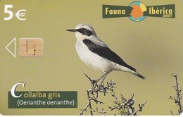 TARJETA DE FAUNA IBERICA DE LA COLLALBA GRIS  (BIRD-PAJARO) - España
