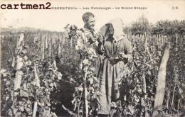 ARGENTEUIL LES VENDANGES LA BONNE GRAPPE METIER AGRICULTURE 95 - Argenteuil