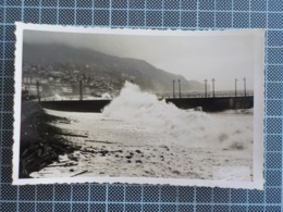 11.334) Portugal Madeira Funchal Fotográfico 1958 Perestrellos - Madeira