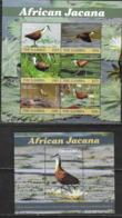 GAMBIA, 2019, MNH, BIRDS, JACANAS, SHEETLET+ S/SHEET, HIGH FV - Birds