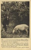 Le Reboisement Avec Des Plants De Chenes Truffiers Mpo LAVAL  Leopold à LOIPCHAT ParMartrel ( Lot) Cochon Truffier RV - Autres Communes