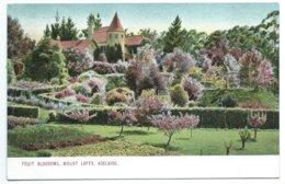 Adelaide - Fruit Blossoms, Mount Lofty - Adelaide
