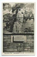 Katoomba - Explorer's Tree - Other
