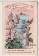 CHROMOS -  Chocolat Poulain Orange - Plantes Médicinales - Poulain