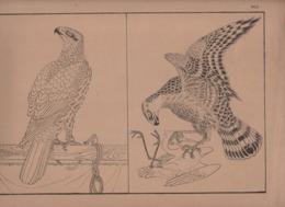 Art Asiatique/ Le Japon Artistique /Siegfried BING/ Gravure/ Charles GILLOT/Marpon & Flammarion/Paris/1888-1891   JAP29 - Estampes & Gravures