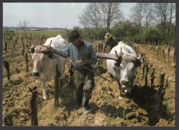 Scènes De La Vie Rurale - Le Labour Dans Les Vignes - Vines