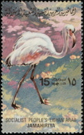 Libye. Libya.  1965.    Flamant Rose. Flamingo - Flamingos