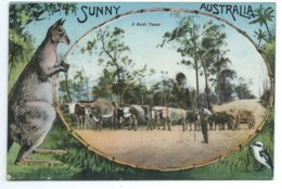 Sunny Australia - A Bush Team - Australien