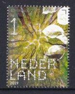 Nederland - 16 September 2019 - Beleef De Natuur- Zomerlinde - Tilia Platyphyllos - MNH - Bomen