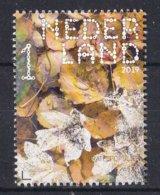 Nederland - 16 September 2019 - Beleef De Natuur- Ratelpopulier - Populus Tremula - MNH - Bomen