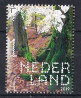 Nederland - 16 September 2019 - Beleef De Natuur- Beukenbos - MNH - Bomen