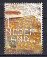 Nederland - 16 September 2019 - Beleef De Natuur- Ruwe Berk - Betula Pendula - MNH - Bomen