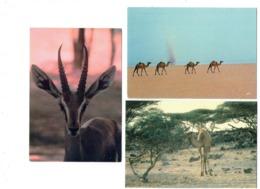 Lot 3 Cpm - Djibouti - Gazelle Chameau - Grand Bara 8813 Iris - Gibuti