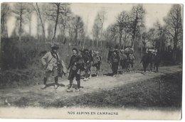 Nos Alpins En Campagne - Mulets - 1916 - Weltkrieg 1914-18