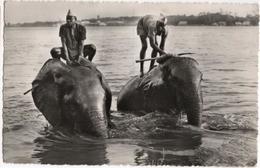 Congo Belge - Eléphants Au Bain - Congo Belge - Autres