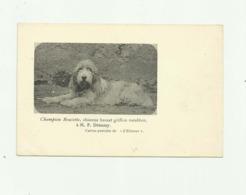 CHIEN - Chienne Basset Griffon VENDEEN  - CHAMPION ROULETTE  A MR DESAMY  Carte Postale De L'eleveur - Chiens