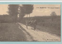 Santhoven : Steeweg Op Oeleghem - Zandhoven