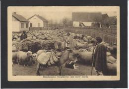 CPA Roumanie Romania Roemenie Non Circulé Ane Mouton Métier - Romania