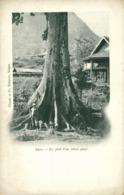 Indochina, LAOS, Au Pied D'un Arbe Géant, Giant Tree (1899) Postcard - Laos