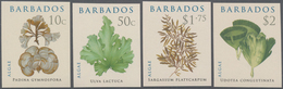 Barbados: 2008, Algae Complete IMPERFORATE Set Of Four, Mint Never Hinged And Scarce! - Barbados (1966-...)